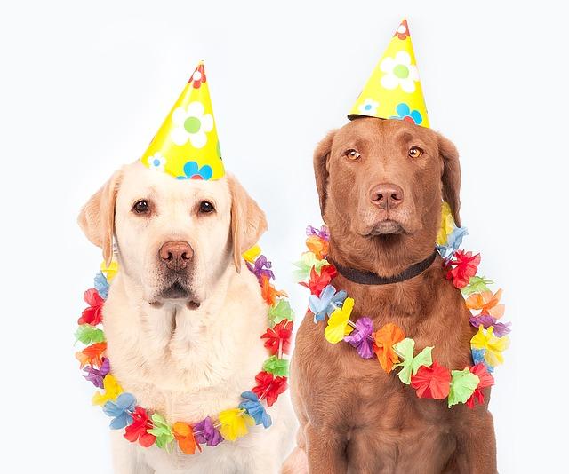 パーティーに参加する2匹の犬