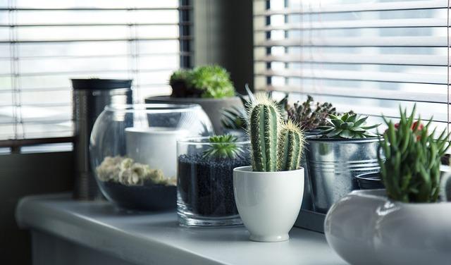 ホームガーデン用の鉢植えサボテン